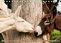 Weiße Esel - Märchenhafte Langohren (Tischkalender 2019 DIN A5 quer) - Produktdetailbild 6
