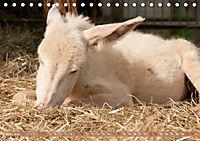 Weiße Esel - Märchenhafte Langohren (Tischkalender 2019 DIN A5 quer) - Produktdetailbild 3