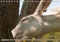 Weiße Esel - Märchenhafte Langohren (Tischkalender 2019 DIN A5 quer) - Produktdetailbild 9