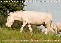 Weiße Esel - Märchenhafte Langohren (Tischkalender 2019 DIN A5 quer) - Produktdetailbild 7