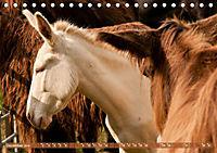 Weiße Esel - Märchenhafte Langohren (Tischkalender 2019 DIN A5 quer) - Produktdetailbild 12