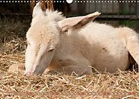 Weiße Esel - Märchenhafte Langohren (Wandkalender 2019 DIN A3 quer) - Produktdetailbild 3