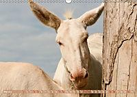 Weiße Esel - Märchenhafte Langohren (Wandkalender 2019 DIN A3 quer) - Produktdetailbild 5