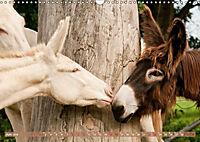 Weisse Esel - Märchenhafte Langohren (Wandkalender 2019 DIN A3 quer) - Produktdetailbild 6
