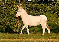 Weiße Esel - Märchenhafte Langohren (Wandkalender 2019 DIN A3 quer) - Produktdetailbild 11