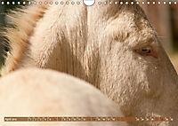 Weisse Esel - Märchenhafte Langohren (Wandkalender 2019 DIN A4 quer) - Produktdetailbild 4