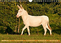 Weisse Esel - Märchenhafte Langohren (Wandkalender 2019 DIN A4 quer) - Produktdetailbild 11