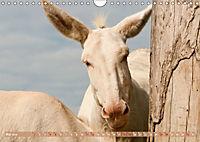 Weisse Esel - Märchenhafte Langohren (Wandkalender 2019 DIN A4 quer) - Produktdetailbild 5