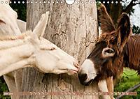 Weisse Esel - Märchenhafte Langohren (Wandkalender 2019 DIN A4 quer) - Produktdetailbild 6