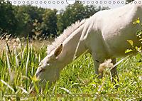 Weisse Esel - Märchenhafte Langohren (Wandkalender 2019 DIN A4 quer) - Produktdetailbild 8