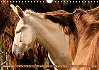 Weisse Esel - Märchenhafte Langohren (Wandkalender 2019 DIN A4 quer) - Produktdetailbild 12