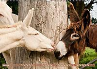 Weiße Esel - Märchenhafte Langohren (Wandkalender 2019 DIN A2 quer) - Produktdetailbild 6