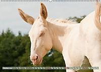 Weiße Esel - Märchenhafte Langohren (Wandkalender 2019 DIN A2 quer) - Produktdetailbild 10