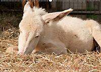 Weiße Esel - Märchenhafte Langohren (Wandkalender 2019 DIN A2 quer) - Produktdetailbild 3