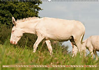 Weiße Esel - Märchenhafte Langohren (Wandkalender 2019 DIN A2 quer) - Produktdetailbild 7