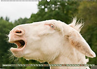 Weiße Esel - Märchenhafte Langohren (Wandkalender 2019 DIN A2 quer) - Produktdetailbild 1