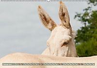 Weiße Esel - Märchenhafte Langohren (Wandkalender 2019 DIN A2 quer) - Produktdetailbild 2