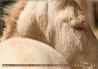 Weiße Esel - Märchenhafte Langohren (Wandkalender 2019 DIN A2 quer) - Produktdetailbild 4