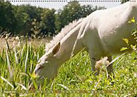 Weiße Esel - Märchenhafte Langohren (Wandkalender 2019 DIN A2 quer) - Produktdetailbild 8
