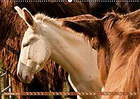 Weiße Esel - Märchenhafte Langohren (Wandkalender 2019 DIN A2 quer) - Produktdetailbild 12