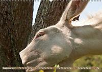 Weiße Esel - Märchenhafte Langohren (Wandkalender 2019 DIN A2 quer) - Produktdetailbild 9