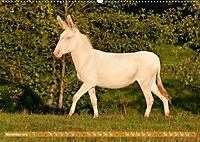 Weiße Esel - Märchenhafte Langohren (Wandkalender 2019 DIN A2 quer) - Produktdetailbild 11