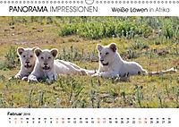 Weiße Löwen in Afrika PANORAMA IMPRESSIONEN (Wandkalender 2019 DIN A3 quer) - Produktdetailbild 2