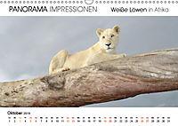 Weiße Löwen in Afrika PANORAMA IMPRESSIONEN (Wandkalender 2019 DIN A3 quer) - Produktdetailbild 10