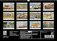 Weiße Löwen in Afrika PANORAMA IMPRESSIONEN (Wandkalender 2019 DIN A3 quer) - Produktdetailbild 13