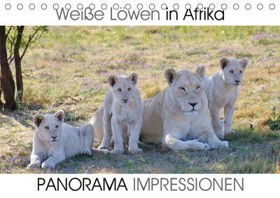 Weiße Löwen in Afrika PANORAMA IMPRESSIONEN (Tischkalender 2019 DIN A5 quer), Barbara Fraatz