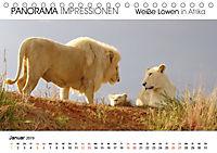 Weiße Löwen in Afrika PANORAMA IMPRESSIONEN (Tischkalender 2019 DIN A5 quer) - Produktdetailbild 1