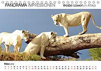 Weiße Löwen in Afrika PANORAMA IMPRESSIONEN (Tischkalender 2019 DIN A5 quer) - Produktdetailbild 3