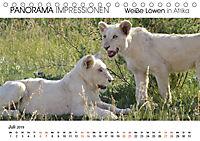 Weiße Löwen in Afrika PANORAMA IMPRESSIONEN (Tischkalender 2019 DIN A5 quer) - Produktdetailbild 7