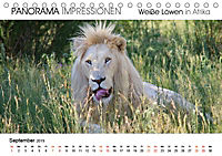Weiße Löwen in Afrika PANORAMA IMPRESSIONEN (Tischkalender 2019 DIN A5 quer) - Produktdetailbild 9