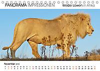 Weiße Löwen in Afrika PANORAMA IMPRESSIONEN (Tischkalender 2019 DIN A5 quer) - Produktdetailbild 11
