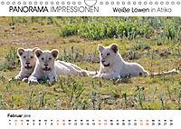 Weiße Löwen in Afrika PANORAMA IMPRESSIONEN (Wandkalender 2019 DIN A4 quer) - Produktdetailbild 2