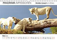Weiße Löwen in Afrika PANORAMA IMPRESSIONEN (Wandkalender 2019 DIN A4 quer) - Produktdetailbild 3