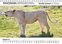 Weiße Löwen in Afrika PANORAMA IMPRESSIONEN (Wandkalender 2019 DIN A4 quer) - Produktdetailbild 8