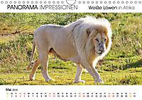 Weiße Löwen in Afrika PANORAMA IMPRESSIONEN (Wandkalender 2019 DIN A4 quer) - Produktdetailbild 5