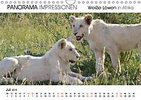 Weiße Löwen in Afrika PANORAMA IMPRESSIONEN (Wandkalender 2019 DIN A4 quer) - Produktdetailbild 7