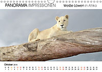 Weiße Löwen in Afrika PANORAMA IMPRESSIONEN (Wandkalender 2019 DIN A4 quer) - Produktdetailbild 10
