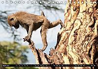 Weites Land - Safari in der Serengeti (Tischkalender 2019 DIN A5 quer) - Produktdetailbild 4
