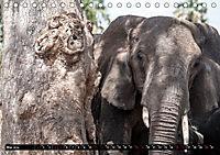 Weites Land - Safari in der Serengeti (Tischkalender 2019 DIN A5 quer) - Produktdetailbild 5