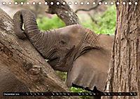 Weites Land - Safari in der Serengeti (Tischkalender 2019 DIN A5 quer) - Produktdetailbild 12