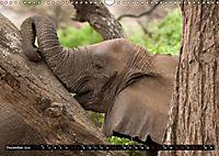 Weites Land - Safari in der Serengeti (Wandkalender 2019 DIN A3 quer) - Produktdetailbild 12