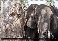 Weites Land - Safari in der Serengeti (Wandkalender 2019 DIN A3 quer) - Produktdetailbild 5