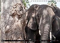 Weites Land - Safari in der Serengeti (Wandkalender 2019 DIN A4 quer) - Produktdetailbild 5
