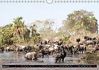 Weites Land - Safari in der Serengeti (Wandkalender 2019 DIN A4 quer) - Produktdetailbild 6