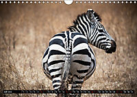 Weites Land - Safari in der Serengeti (Wandkalender 2019 DIN A4 quer) - Produktdetailbild 7
