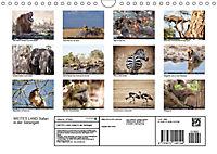 Weites Land - Safari in der Serengeti (Wandkalender 2019 DIN A4 quer) - Produktdetailbild 13